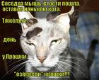 https://lolkot.ru/2015/05/11/usatyy-kotonyan/