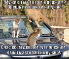 https://lolkot.ru/2014/02/14/ushastyye-gubki/