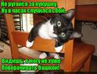 https://lolkot.ru/2020/09/04/uteshitelnoye-ku-ku/