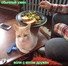 https://lolkot.ru/2018/03/28/uzhin-s-kotom/