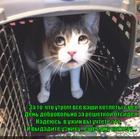 https://lolkot.ru/2014/07/12/uznik-sovesti/
