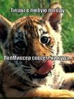 https://lolkot.ru/2013/01/26/v-lyubuyu-pogodu/