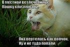 https://lolkot.ru/2012/04/24/v-mestnoy-vetlechebnitse/