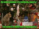 https://lolkot.ru/2018/12/16/v-ozhidanii-shurshunchika/