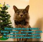 https://lolkot.ru/2013/12/13/v-zasade-snayper/