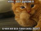 https://lolkot.ru/2008/06/03/v-chem-sila/