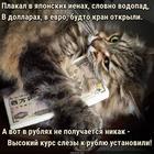 https://lolkot.ru/2018/08/13/valyutnyy-plakalschik/