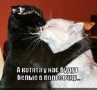 https://lolkot.ru/2014/07/16/vam-kakoy-rastsvetochki/