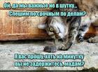https://lolkot.ru/2020/03/19/vazhnodelnaya-madam/