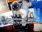 https://lolkot.ru/2010/09/18/vcherashnyaya-luzha/