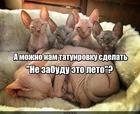 https://lolkot.ru/2020/07/01/vechnaya-napominalka/