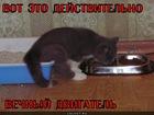 https://lolkot.ru/2012/03/28/vechnyy-dvigatel/