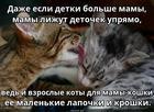 https://lolkot.ru/2020/05/11/vechnyye-detochki/