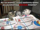 https://lolkot.ru/2014/05/13/velikolepnaya-pyaterka-i-hvostar/
