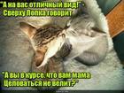 https://lolkot.ru/2019/09/07/verhovnyy-blyudetel/