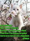 https://lolkot.ru/2017/02/03/vernyye-druzya/