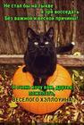 https://lolkot.ru/2018/10/31/veseloye-pozhelaniye/