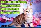 https://lolkot.ru/2017/03/01/vesne-dorogu/