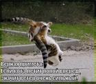 https://lolkot.ru/2011/12/15/veter-ochen-silnyy/