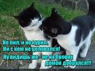 https://lolkot.ru/2020/09/11/vhodnoy-nyuhokontrol/