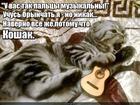 https://lolkot.ru/2017/02/24/virtuoz-gitary/