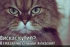 https://lolkot.ru/2012/05/29/viskas-kupil/