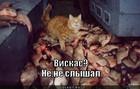 https://lolkot.ru/2011/06/18/viskas-3/