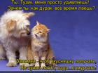 https://lolkot.ru/2015/12/18/vklyuchi-murchalnik/