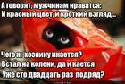 https://lolkot.ru/2018/11/26/vnezapnaya-bryunetka/