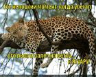 https://lolkot.ru/2014/03/04/vnezapno-4/