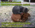 https://lolkot.ru/2015/05/19/vnuk-vyumschik/