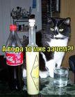 https://lolkot.ru/2010/10/15/voda-zachem/