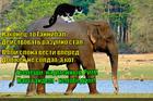 https://lolkot.ru/2015/05/14/voditel-boyevogo-slona/