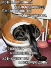 https://lolkot.ru/2012/12/03/vodolaz/