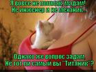 https://lolkot.ru/2013/12/18/volnuyuschiy-vopros/