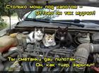 https://lolkot.ru/2016/05/25/vosemsot-koshadinyh-sil-pod-kapotom/