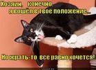 https://lolkot.ru/2010/12/07/voshyol-v-polozheniye/