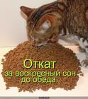 https://lolkot.ru/2010/07/09/voskresnyy-son/