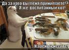 https://lolkot.ru/2013/09/12/vospitannyy-kot/