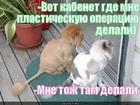https://lolkot.ru/2012/10/17/vot-kabenet/