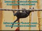 https://lolkot.ru/2014/04/16/vpered-na-obodrazh/