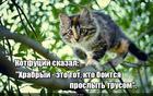 https://lolkot.ru/2017/03/04/vpered-na-vstrechu-hrabrostyam/