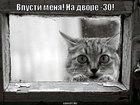 https://lolkot.ru/2010/07/13/vpusti-menya-2/