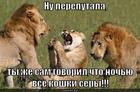 https://lolkot.ru/2013/06/12/vse-koshki-sery/