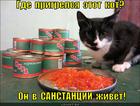 https://lolkot.ru/2014/01/13/vsem-stoyat-sanikorkontrol/