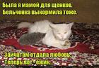 https://lolkot.ru/2019/05/15/vsemama/
