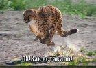 https://lolkot.ru/2011/02/04/vstavilo-2/