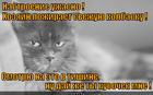 https://lolkot.ru/2013/04/06/vyzhech-vzglyadom/