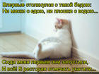 https://lolkot.ru/2017/01/28/vyzhivshiy-nachalo/