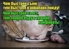 https://lolkot.ru/2018/07/12/vzaimovygodnyy-soyuz/